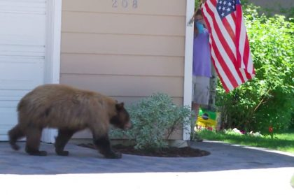 Man and Bear Scare Each Other At The Very Same Time